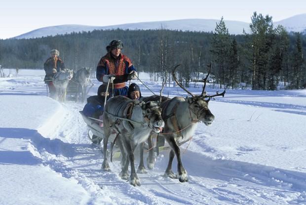 Reindeer ride at Levi