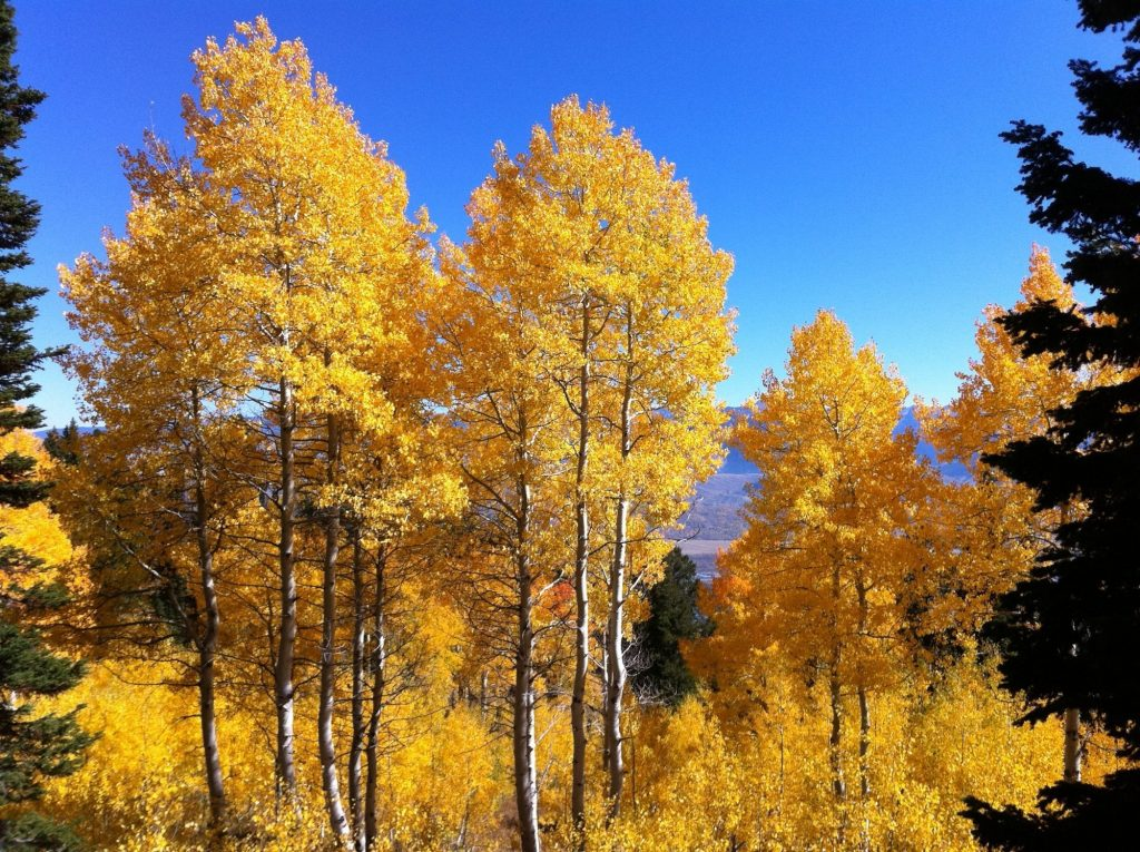 Jackson Hole in fall